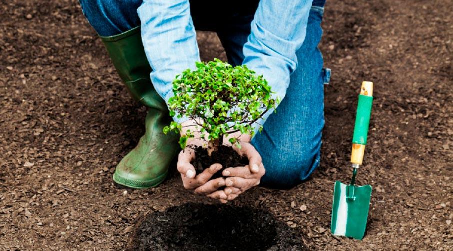 На Прикарпатті в лісництві вирощують саджанці по-новому. Відео
